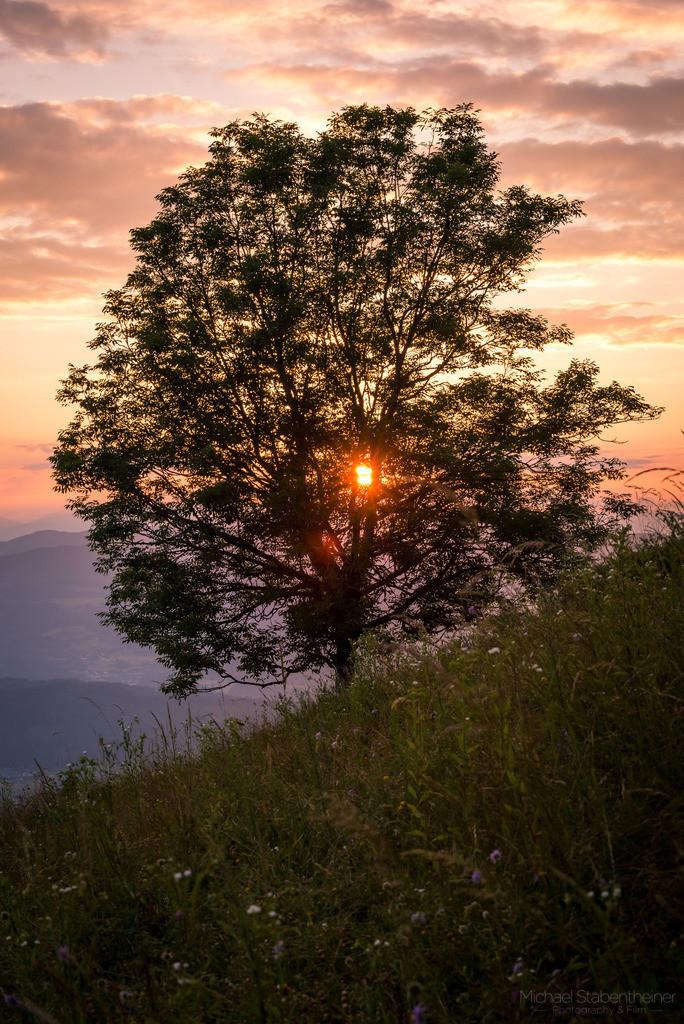 Baum im Sonnenuntergang | Ein Baum am Magdalensberg bei St. Veit im Sonnenuntergang