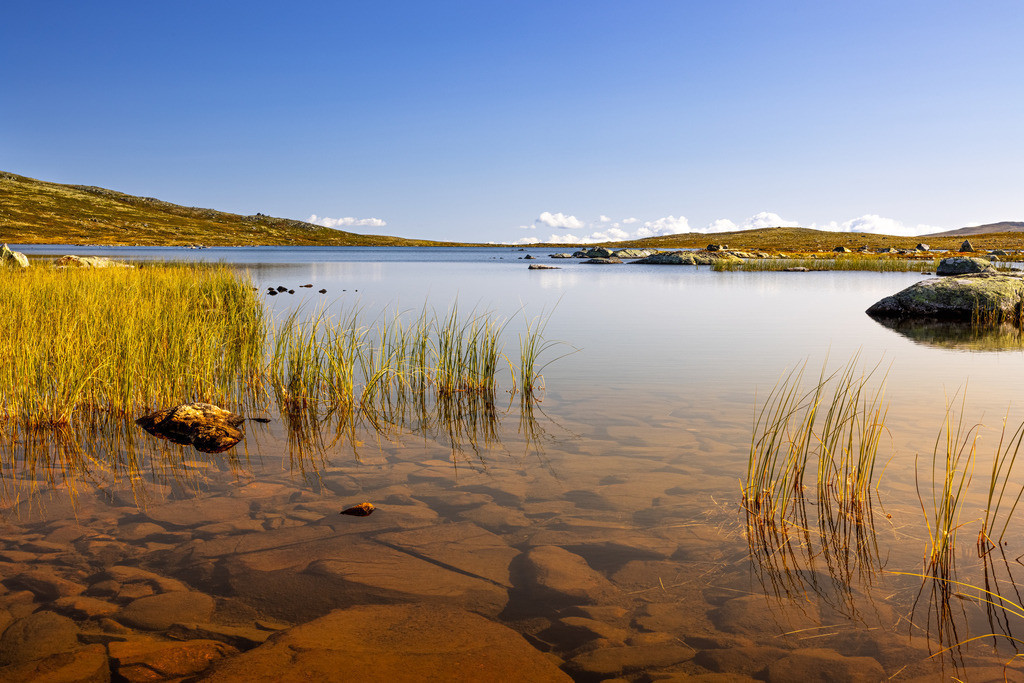Grass in the Fjell region | One of the thousands of small lakes somewhere in Norway with some grass