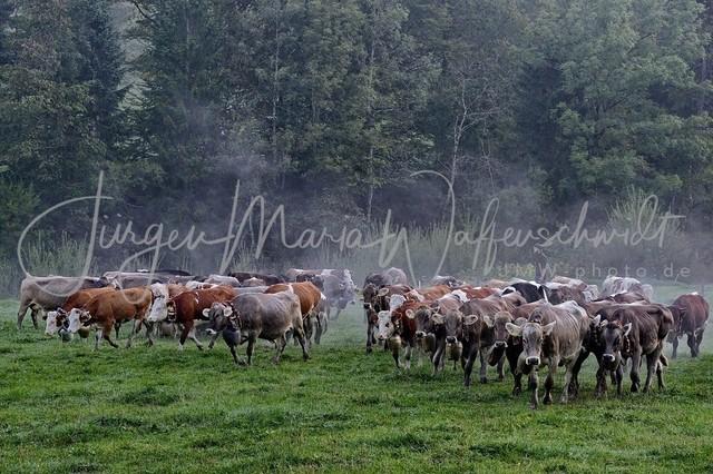 1200098_Viehscheid_Oberstaufen_2012-JWA