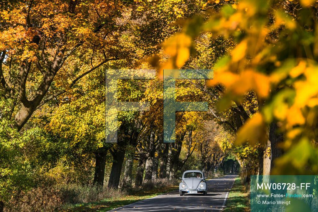 MW06728-FF | Deutschland | Brandenburg | VW Käfer auf Deutschlandtour | Oldtimer VW Käfer auf einer Alleenstraße in Linumhorst   ** Feindaten bitte anfragen bei Mario Weigt Photography, info@asia-stories.com **