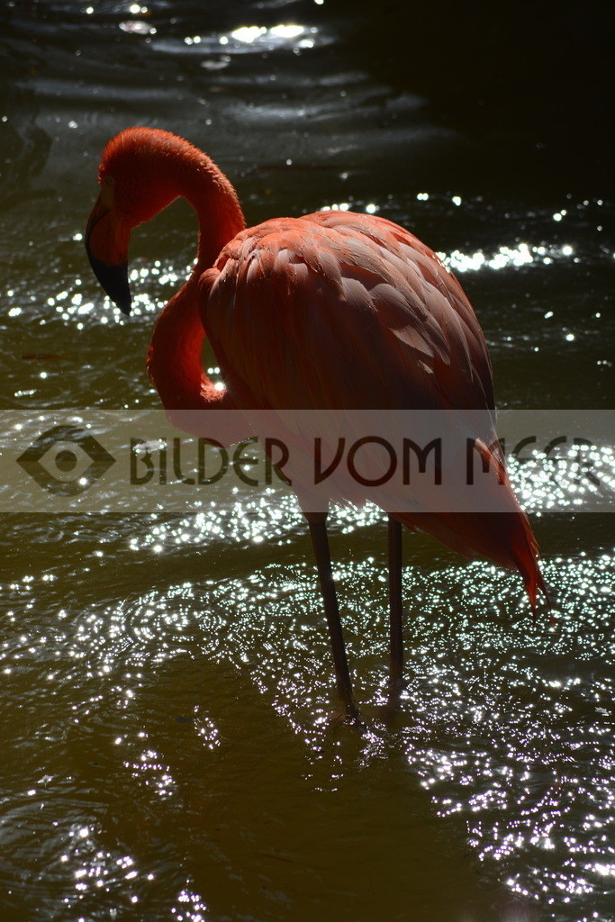 Flamingo Art Bilder   Roter Flamingo Art Bilder
