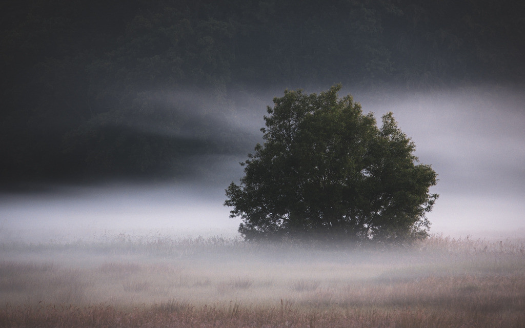 The Foggy Tree | Morgennebel in einer Senke bei Westensee.