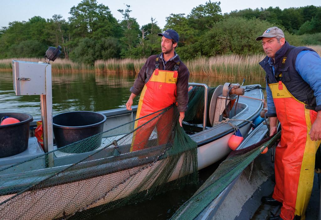 Wadenfischen auf der Schlei © Holger Rüdel | Die Schleswiger Fischer Jörn und Nils Ross (links) beim Einholen eines Wadennetzes auf der Kleinen Breite der Schlei. Höchste Konzentration ist gefragt. Jeder Griff muss sitzen.