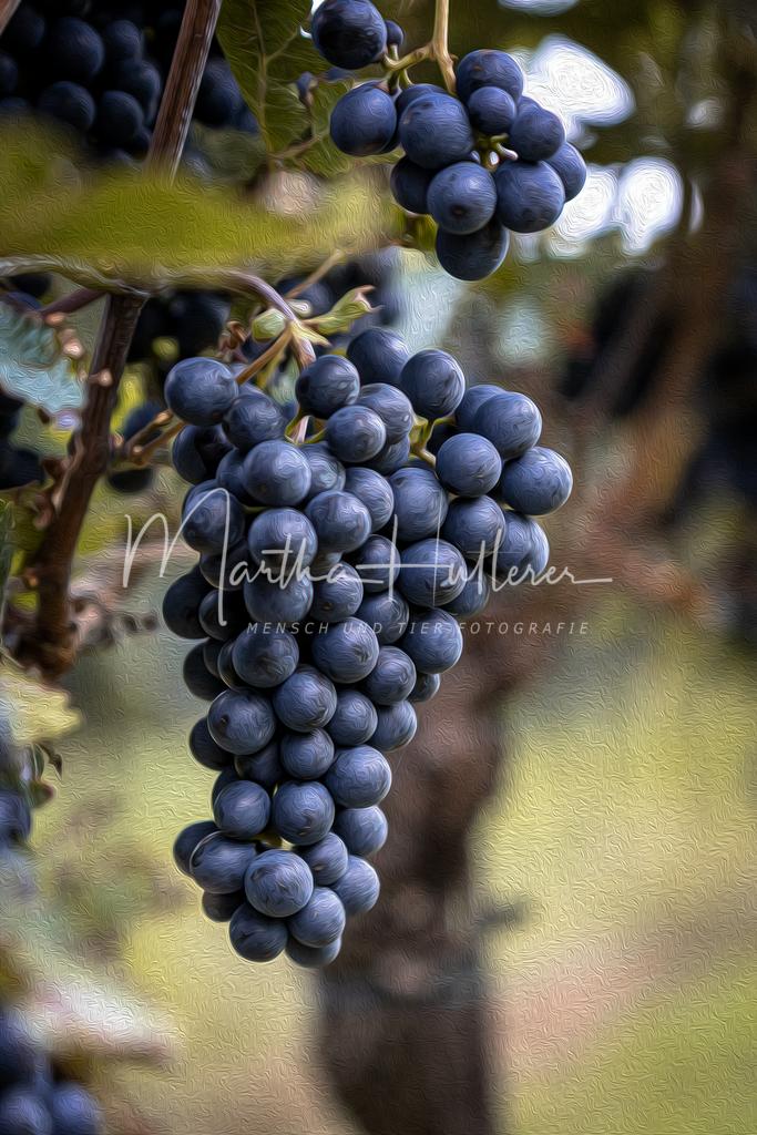 Weintrauben Gemälde