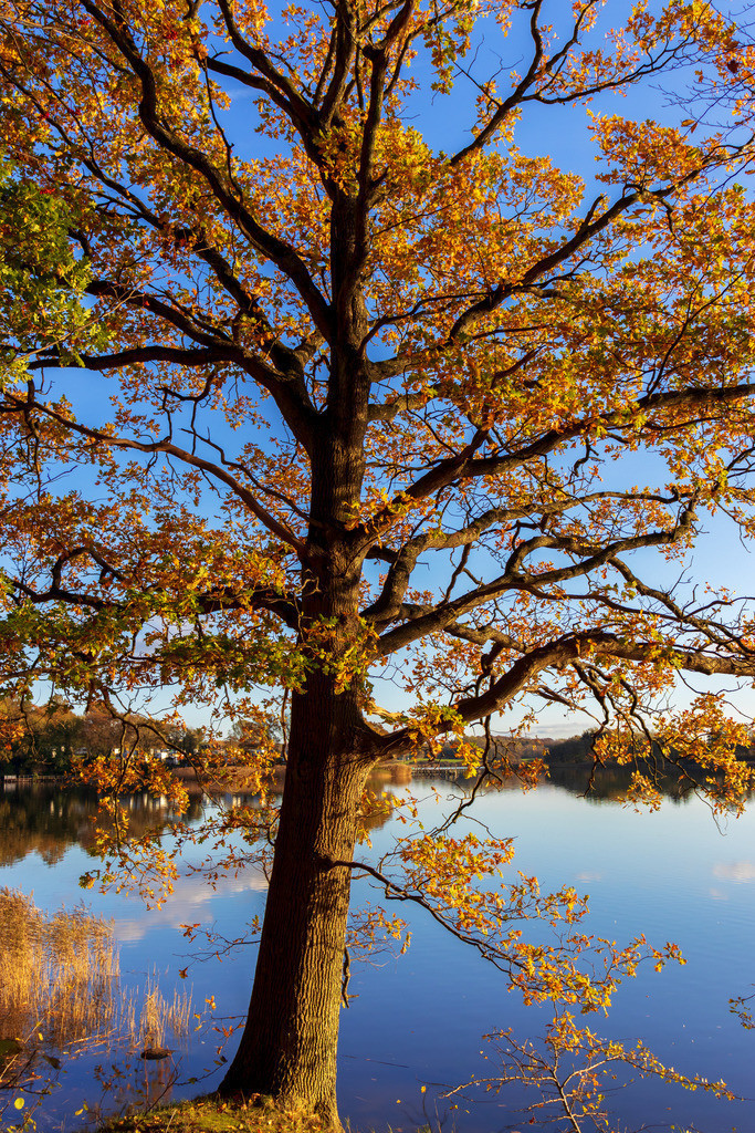Lindaunis an der Schlei | Lindaunis an der Schlei im Herbst