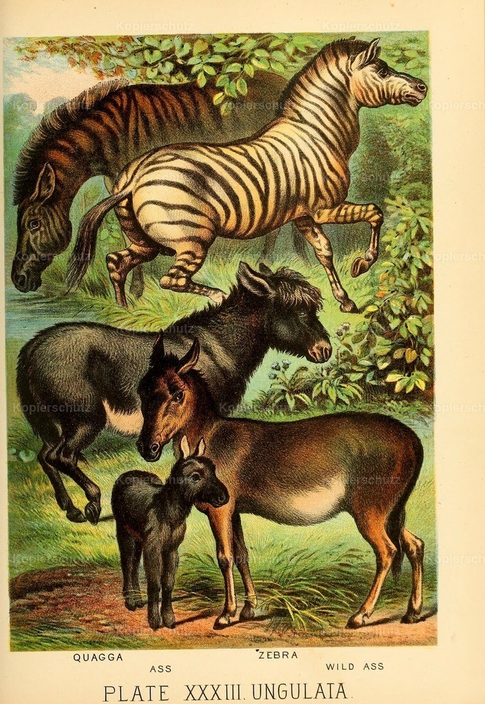 Johnson_s- Household-Book- of-Nature-1880-(34)