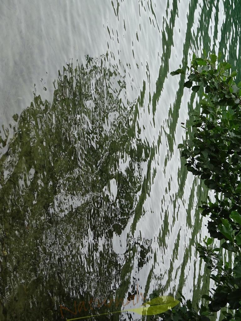 Wasserfuchs | Der Wasserfuchs schaut ganz erstaunt - er leistet Dir ab jetzt gerne Gesellschaft.
