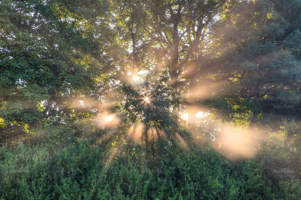 0-120815_0712-8422-25 | Dateigröße 5759 x 3839 Pixel Sonnestrahlen brechen durch die Bäume im Morgennebel.