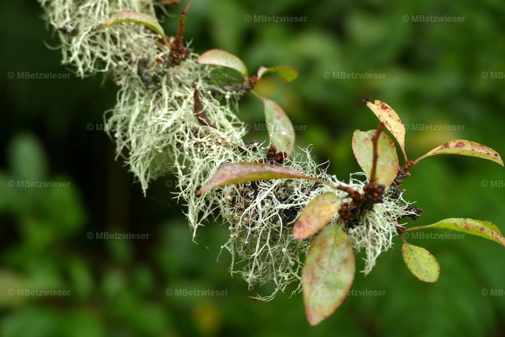 P1010222 | Hohe Luftfeuchtigkeit fördert Flechtenwachstum