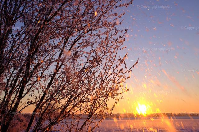 Winterlandschaft mit Sonnenaufgang | Sonnenaufgang mit fallendem Schnee im Gegenlicht der aufgehenden Sonne.