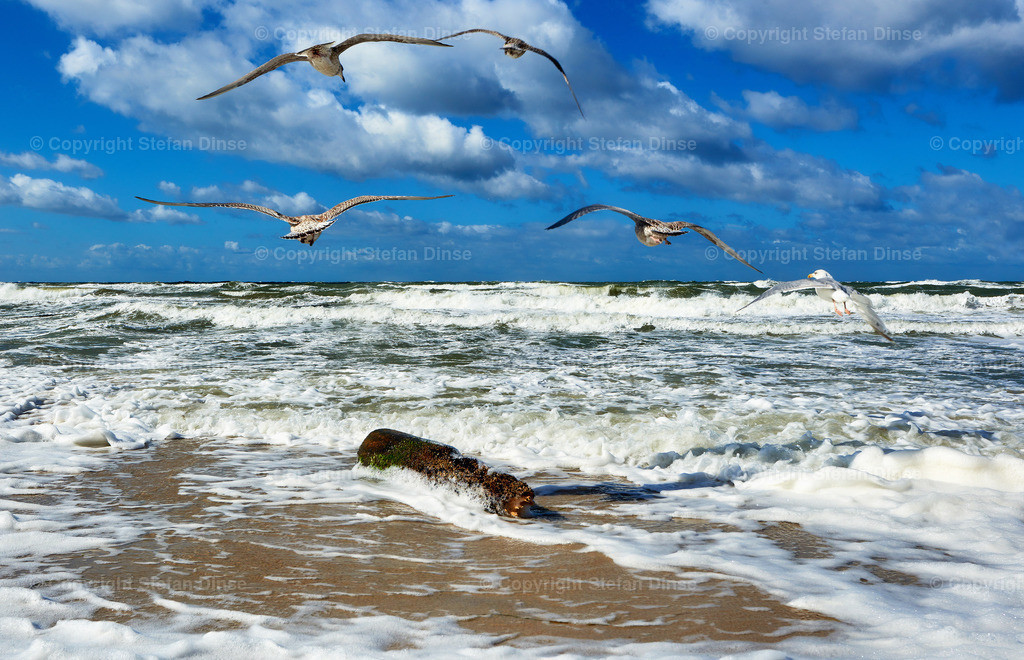 stormy sea with flying seagulls | stormy sea with flying seagulls