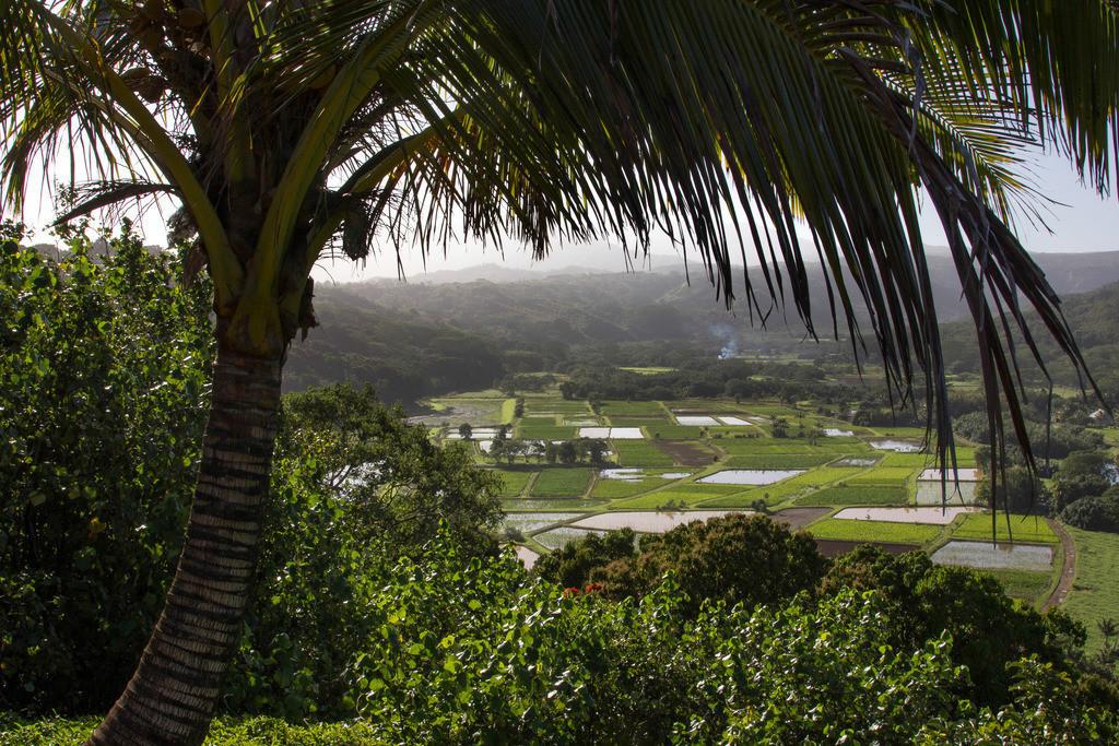 Hawaii RAW (868)
