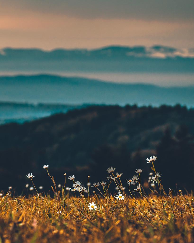 Herbst am Hünersedel im Schwarzwald