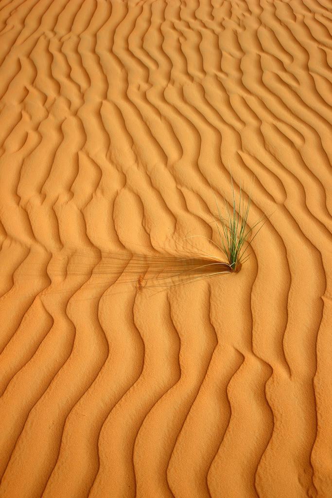 JT-110228-4011 | Roter Sand, Sandduenen, in der Empty Quarter genannten Wueste Rub'al-Khali, vereinzelte Pflanzen ueberleben. Abu Dhabi, Vereinigte Arabische Emirate.