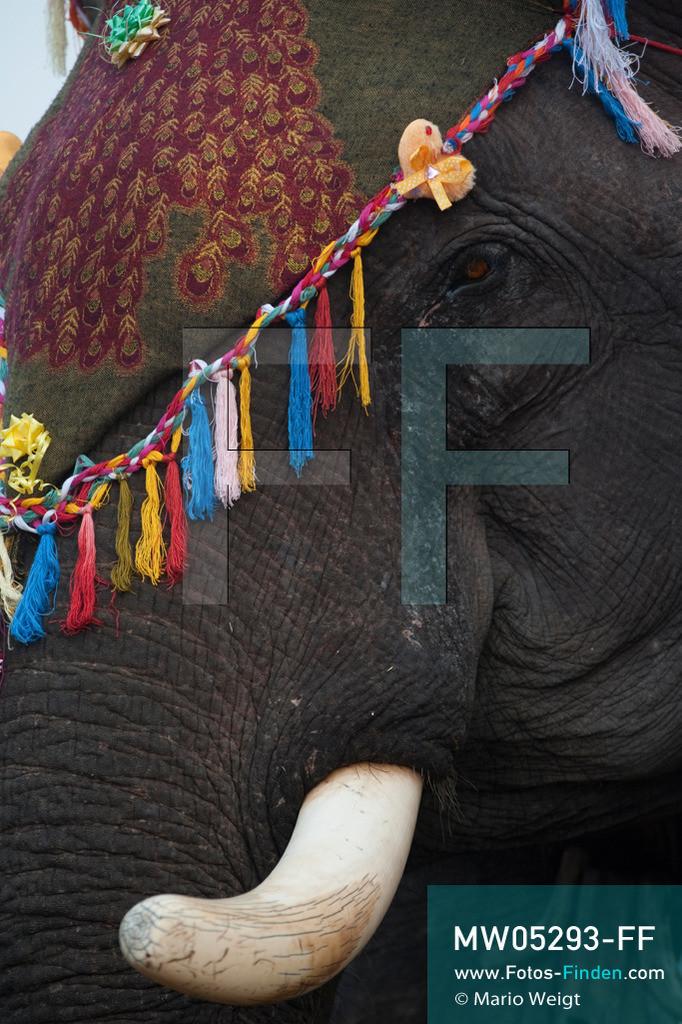 MW05293-FF   Laos   Provinz Sayaboury   Vieng Keo   Reportage: Pey Wan im Elefantendorf   Mit bunten Quasten und Malerei geschmückter Elefantenkopf. Der achtjährige Pey Wan lebt im Elefantendorf Vieng Keo im Nordwesten von Laos. Im Dorf wohnen ca. 500 Leute mit 17 Arbeitselefanten. Sein Vater Hom Peng hat einen 31 Jahre alten Elefantenbullen namens Boun Van, mit dem er im Holzfällercamp im Dschungel arbeitet. Zum Elefantenfest schmückt Pey Wan den Jumbo und darf mit ihm an der Prozession durchs Dorf teilnehmen. Pey Wan möchte, wie sein Vater, später auch Elefantenführer werden.   ** Feindaten bitte anfragen bei Mario Weigt Photography, info@asia-stories.com **