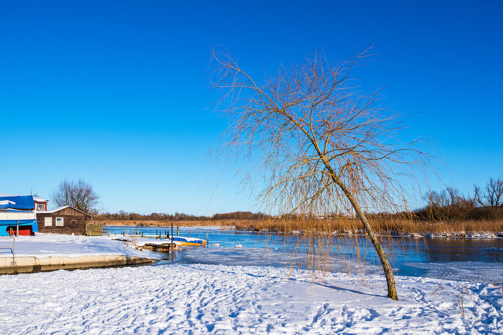 Baum an der Warnow in der Hansestadt Rostock im Winter | Baum an der Warnow in der Hansestadt Rostock im Winter.