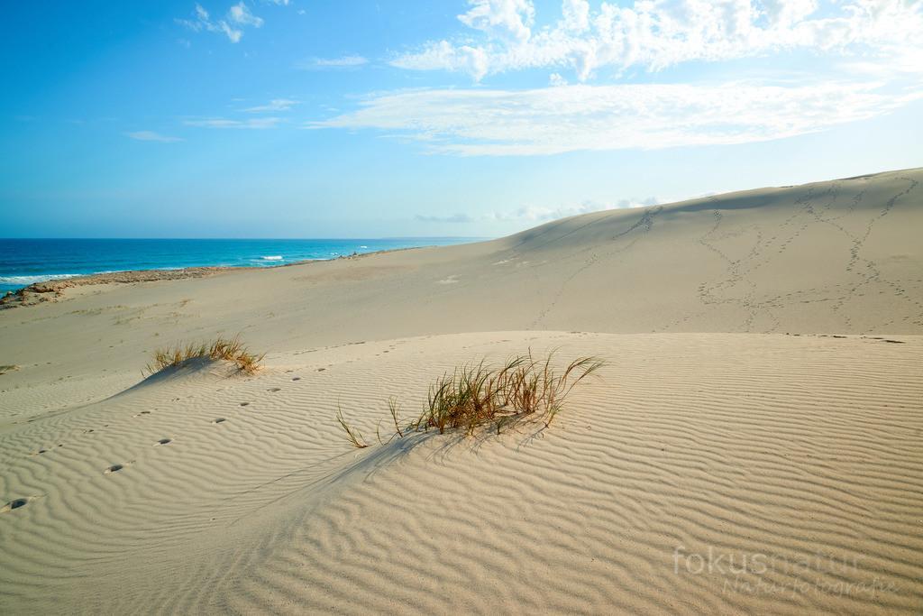 Dünen von De Hoop | Riesige Sanddünen an der Atlantikküste im Naturreservat De Hoop.