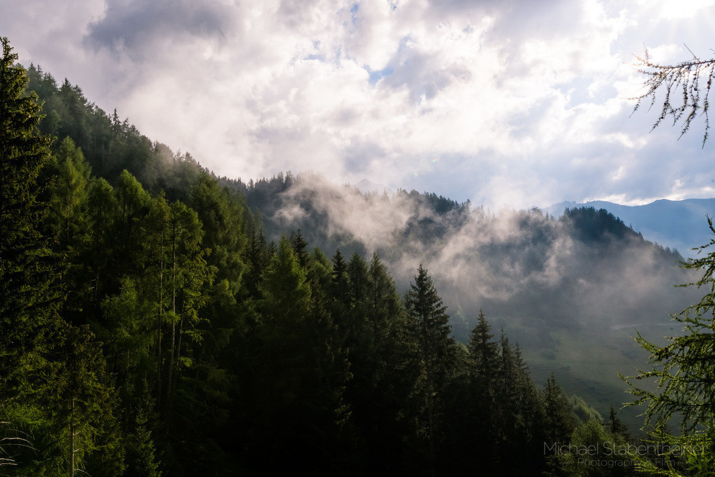 Wald | Nebel im Wald in Osttirol