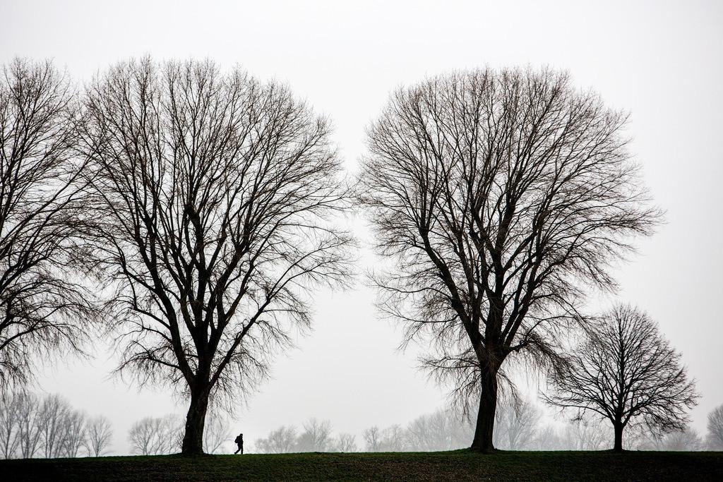 JT-130225-026   Tristes Winterwetter, Nebel, kahle Bäume, Rheindamm bei Düsseldorf-Stockum. Wanderer.