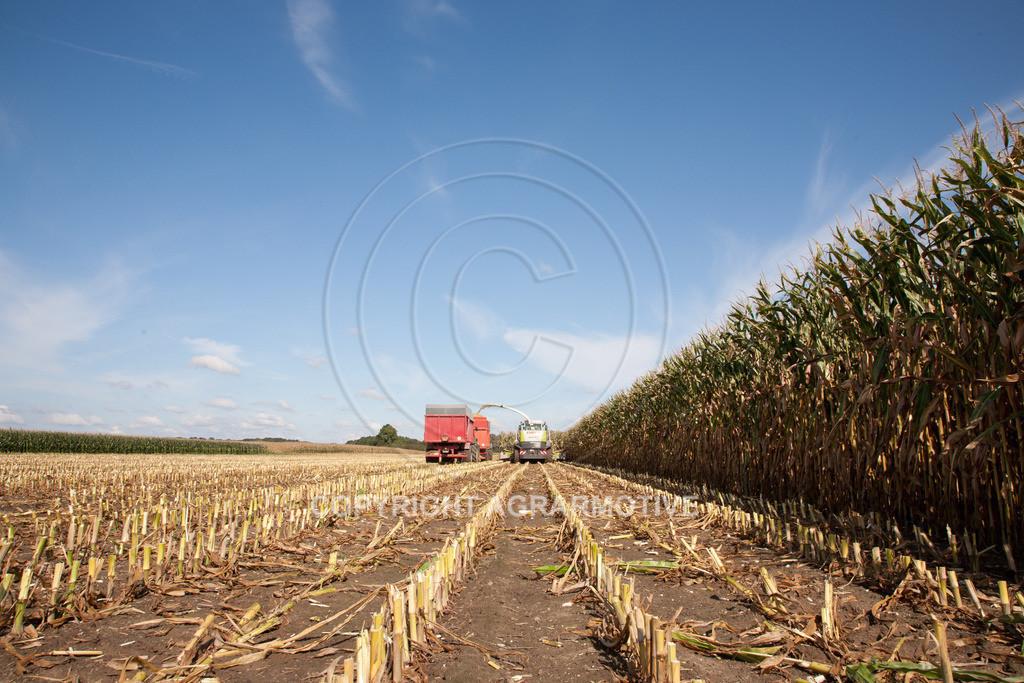 20080914-IMG_8959 | Silomais wird gehäckselt - AGRARFOTO Bilder aus der Landwirtschaft