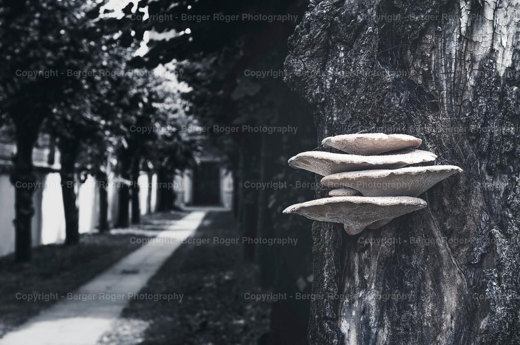 Pilze | Aufgenommen im Tessin