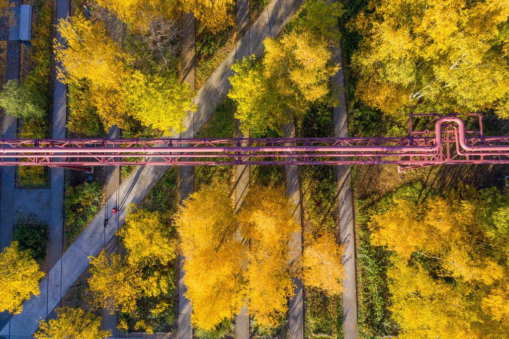 JT-181108-099 | Zeche Zollverein in Essen, UNESCO Welterbe, Gleisboulevard im Zollverein Park im Herbst,