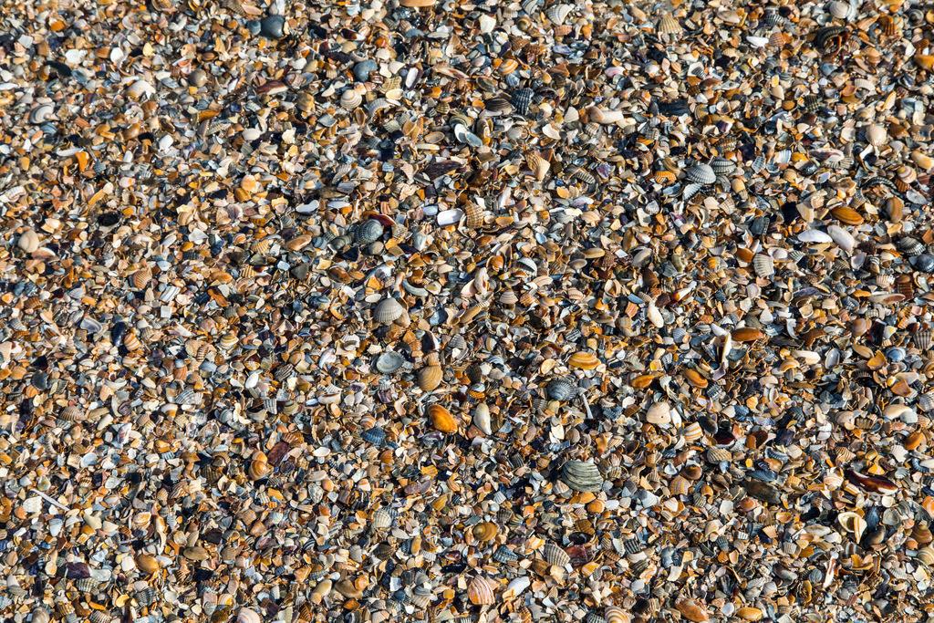 JT-170314-104   Die ostfriesische Nordseeinsel Norderney, Winter, viele kleine Nordseemuscheln, am Strand angespült,