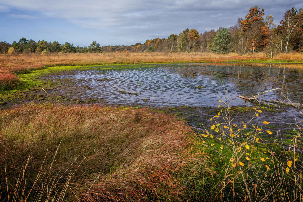 Herbst im Moor | Herbstliche Stimmung im Hamberger Moor.