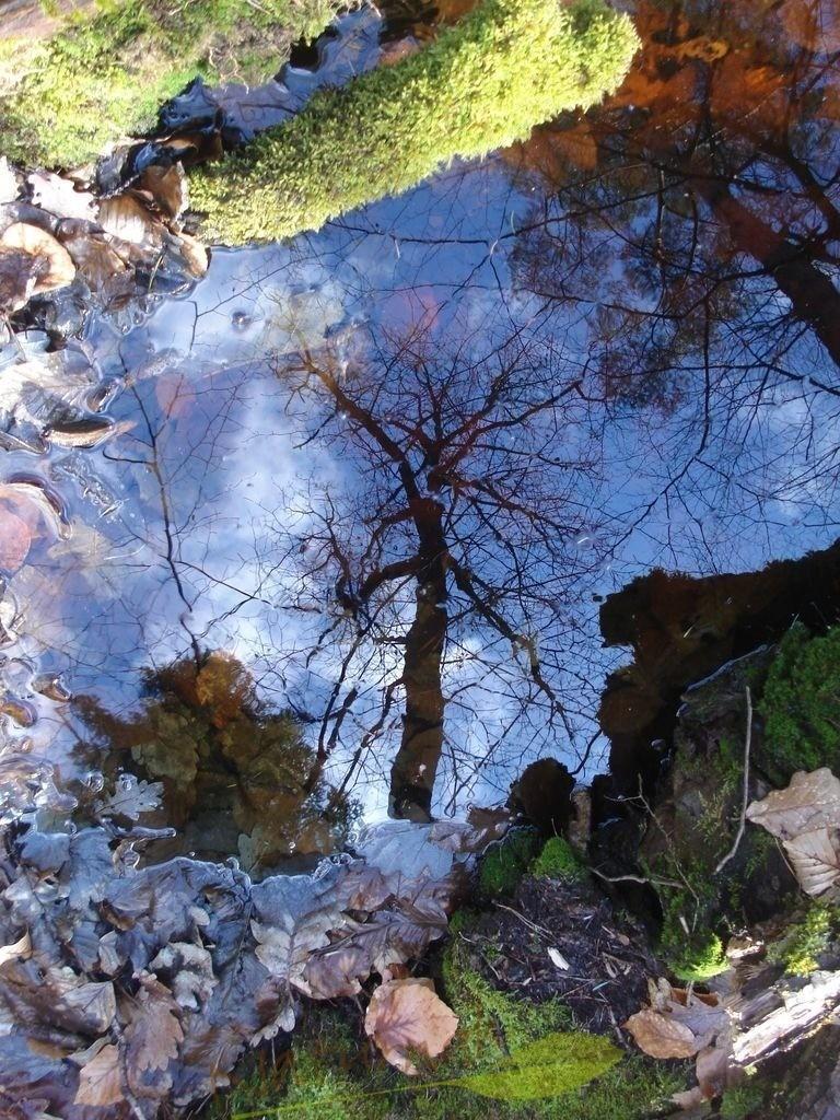 Himmelsmoos | Grünleuchtendes Moos behimmelt die tiefblaue Heimat des starken Baumes. Oder Alles ist so, wie Du es sehen willst: mystisch,  verzaubert oder auch natürlich schön!