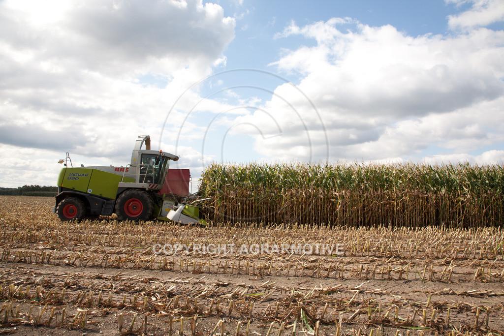 20080914-IMG_9082 | Silomais wird gehäckselt - AGRARFOTO Bilder aus der Landwirtschaft