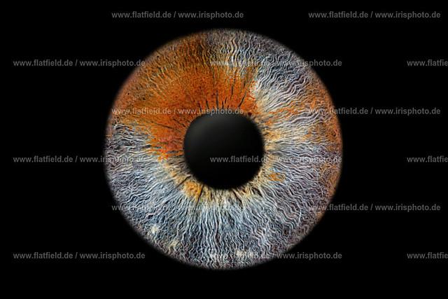 RKF06945-Iris-foto-Beispiel-555