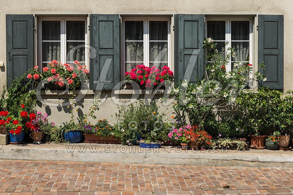 Blumenpracht am Fenster, Ziefen (BL) | Die Fenster des ehemaligen Botenhaus sind reichlich mit Blumen geschmückt, Ziefen im Kanton Baselland.