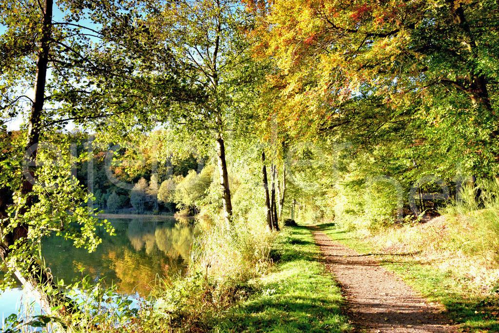 Herbst am Holzmaar in der Vulkaneifel | Das Holzmaar, eins der Gillenfelder Maare