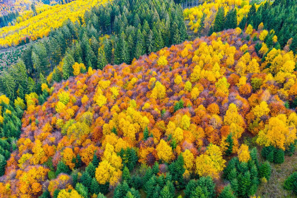 JT-181106-021 | Herbstlicher Wald im Sauerland, NRW, Deutschland, in der Nähe von Bestwig,