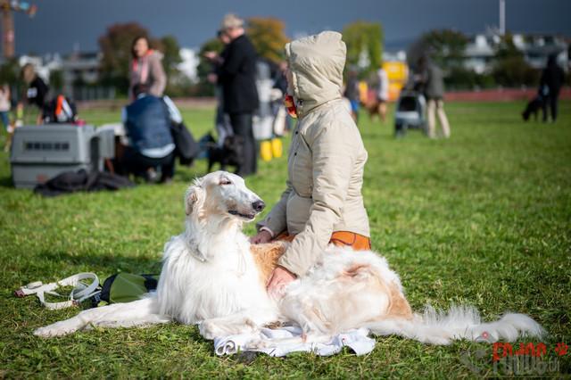 {event} | CACIB Fehraltorf Autumn Swiss Dog auf der Pferderennbahn in Fehraltorf  09.10.2021 Foto: Leo Wyden