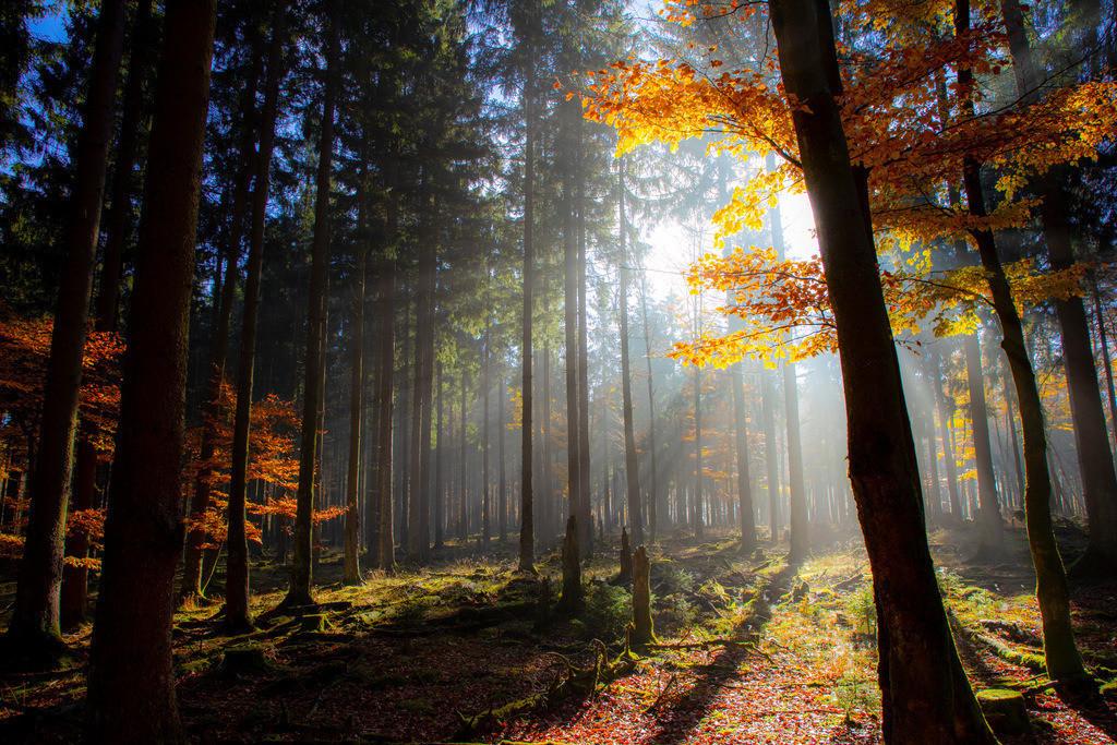 JT-181107-030 | Herbst, Nebel, die Sonne bricht gerade durch den Dunst, Landschaft, Wald, in der Nähe von Jagdhaus, Schmallenberg, Sauerland, NRW, Deutschland, Europa.