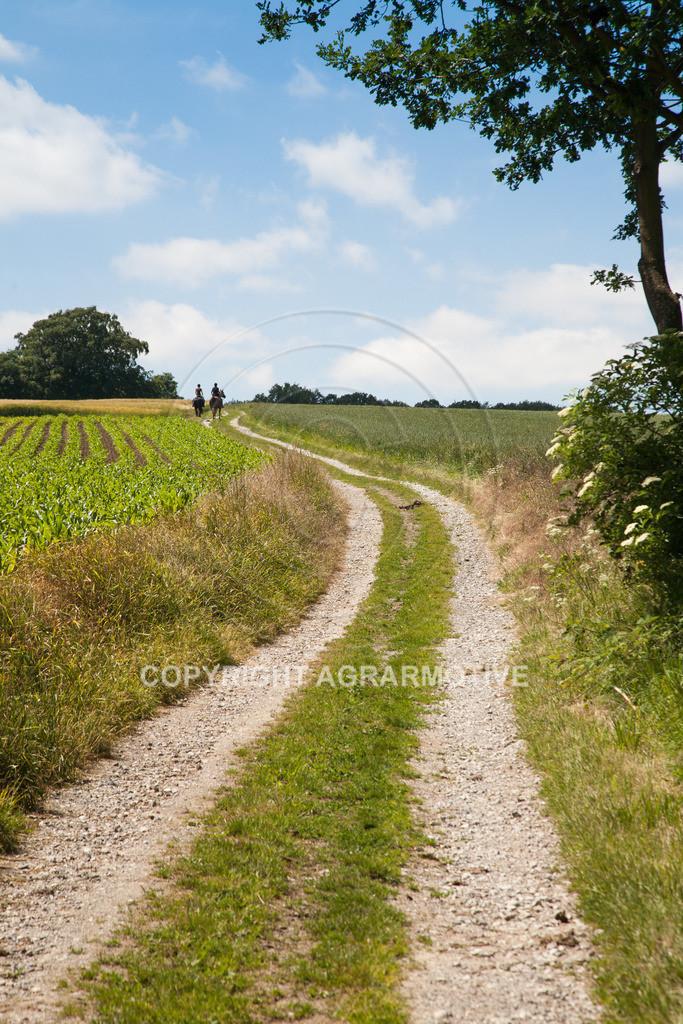 20090613-IMG_3179 | Symbolbild Zukunft - AGRARMOTIVE Bilder aus der Landwirtschaft