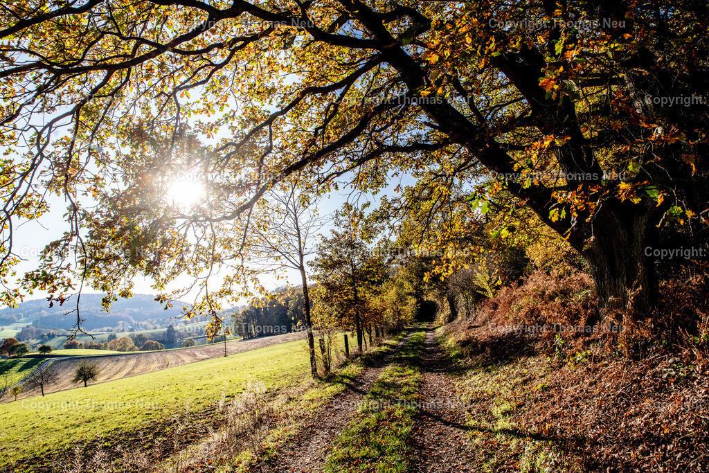 DSC_0564   Odenwald, Neutscher Höhe, Herbsttimmung, Gegenlicht, Weg am Waldsrand, Bäume,  ,, Bild: Thomas Neu