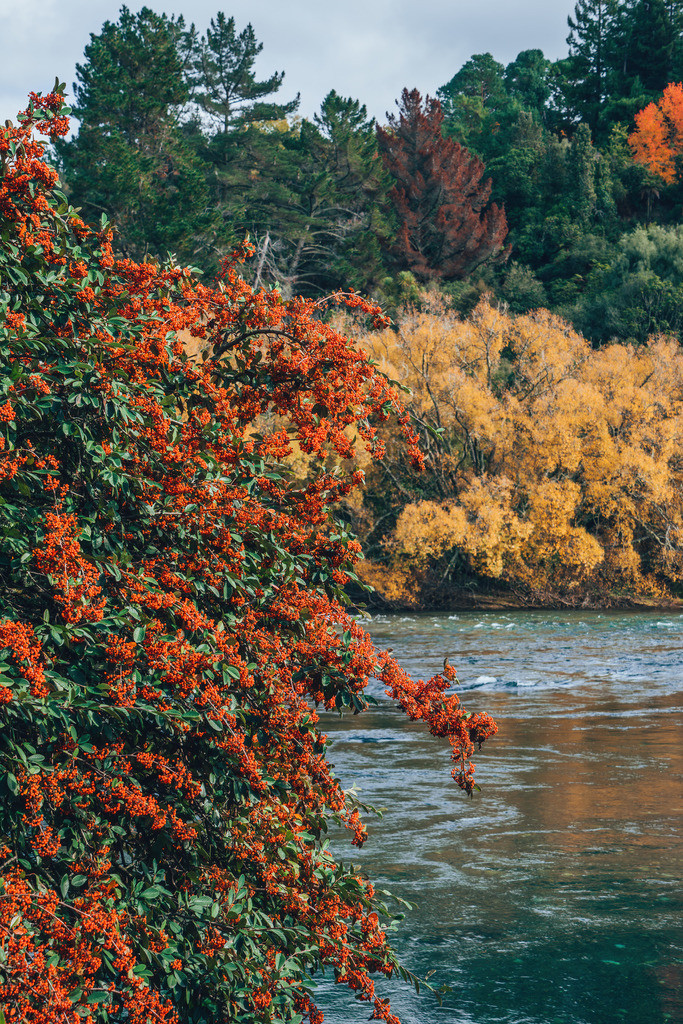 Wanderweg zu den Huka Wasserfällen  | Wanderweg zu den Huka Wasserfällen