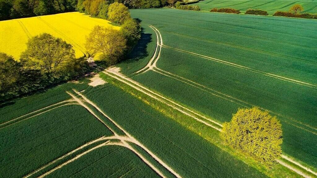Feldlinien | Feld mit Fahrspuren, zwischen Zarpen und Rehhorst