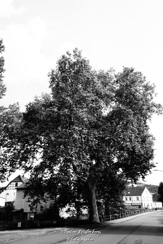 DSC04697   Rockenhausen