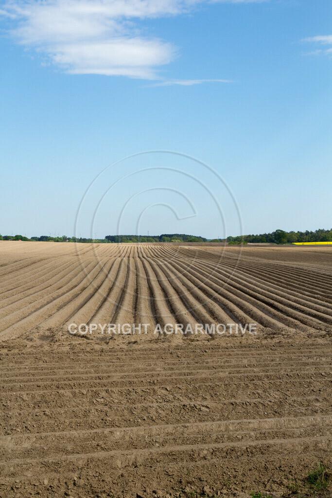 20130515-_MG_6673 | Kartoffelfeld im Frühling - AGRARFOTO BILDAGENTUR