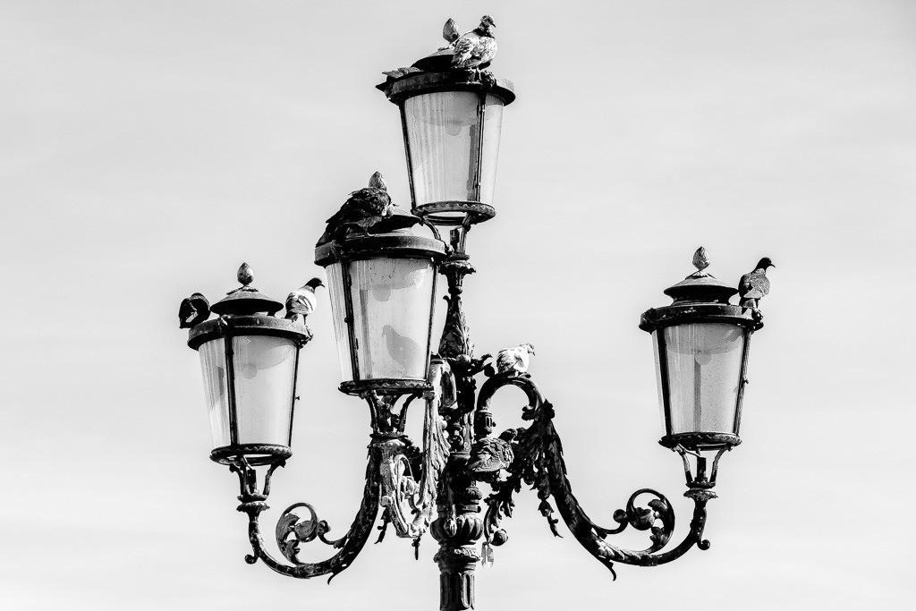 Tauben auf Lampe am Markusplatz
