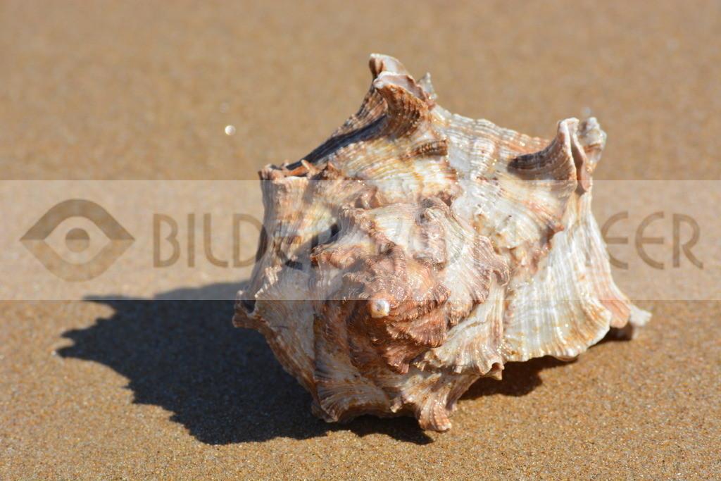 Muschel Bilder am Strand | Muschelbilder am Meer