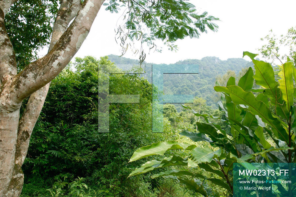 MW02313-FF | Vietnam | Provinz Ninh Binh | Reportage: Endangered Primate Rescue Center | Der Cuc-Phuong-Nationalpark umfasst über 200 Quadratkilometer tropischen Regenwald. Der Deutsche Tilo Nadler leitet das Rettungszentrum für gefährdete Primaten im Cuc-Phuong-Nationalpark.   ** Feindaten bitte anfragen bei Mario Weigt Photography, info@asia-stories.com **