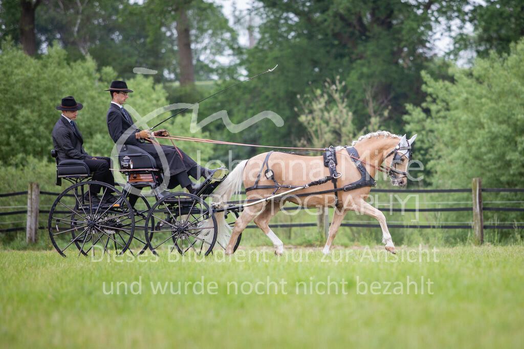 190525_Fahren-013 | Pferdesporttage Herford 2019 Fahren