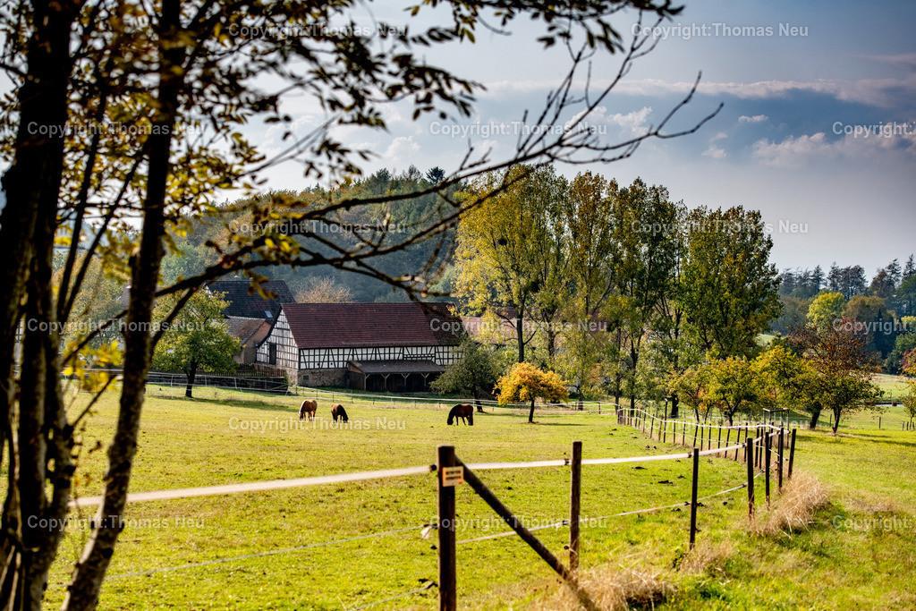 DSC_8557 | bli,Odenwaldidylle , Tourismus, Blick auf Knoden, weidende Pferde,Herbststimmung,  ,, Bild: Thomas Neu