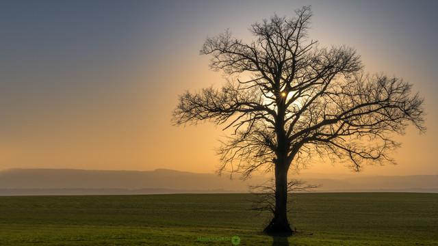 Sonne | Der Frühling zeigt sich langsam