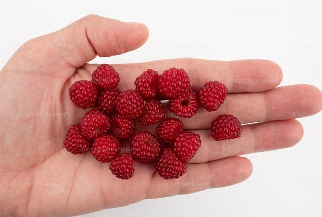 Himbeeren auf der Handfläche   Eine männliche Hand mit gepflückten reifen, roten Himbeeren darauf.
