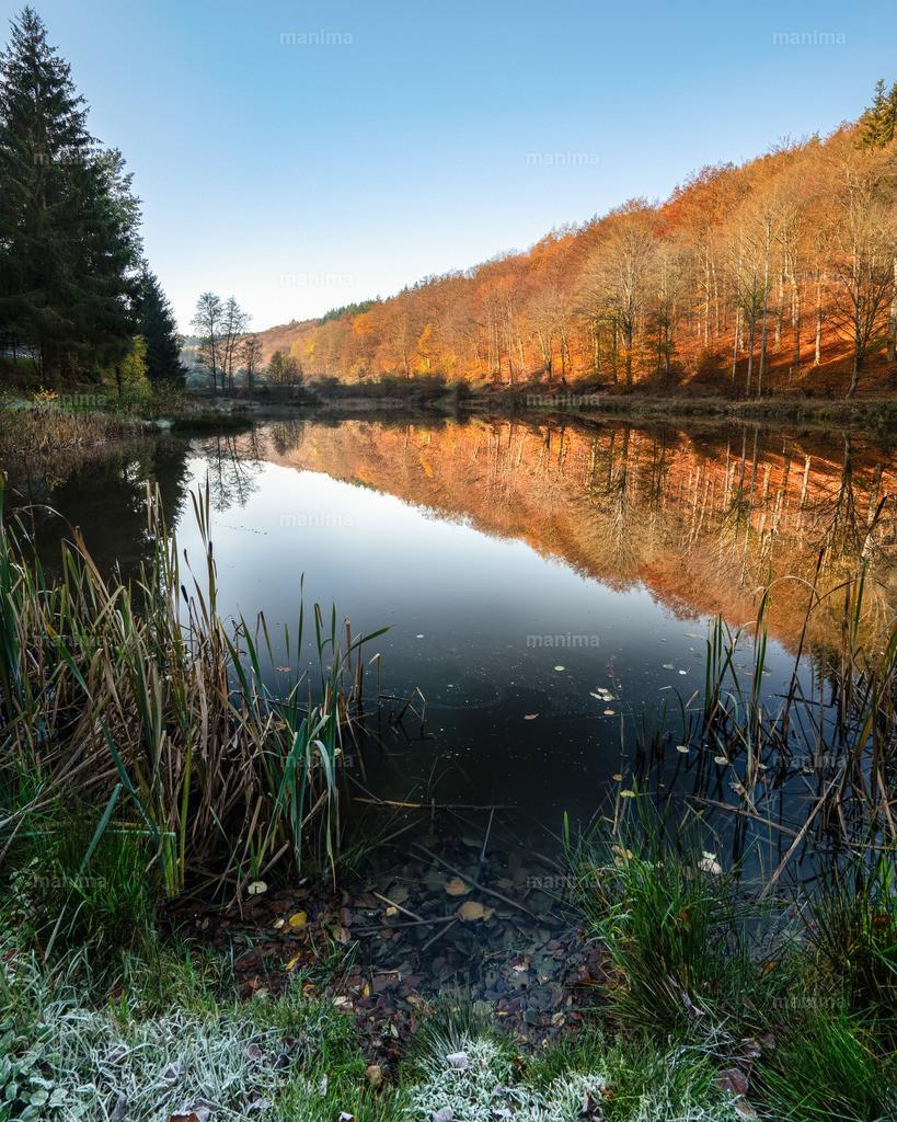 Bärenfichtenweiher, Taunus , Hessen  | Herbst im Taunus
